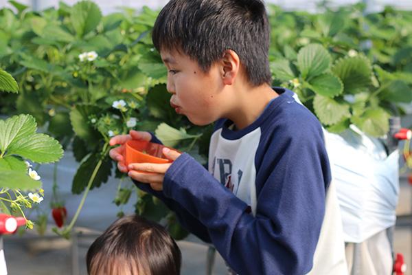 トマトと40年/私たちの想い